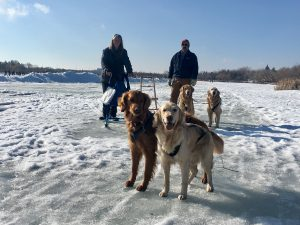 Lianne Daradics (left) and her husband, Rick Daradics (right) spent the day kick sledding on Wascana Lake with their four Golden Retrievers.